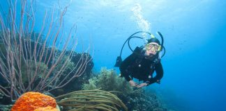 Scuba Diving in Bonaire and Curacao