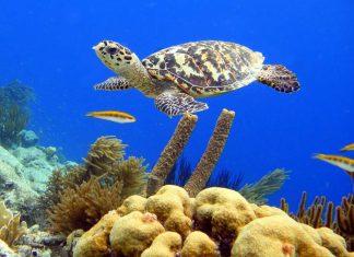 Island of Bonaire