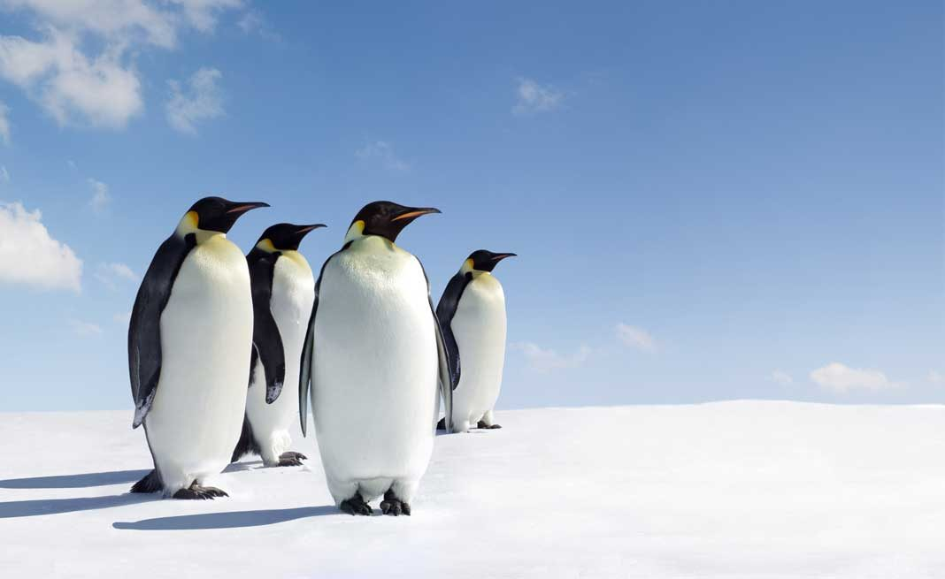 Places Where You Can See Penguins