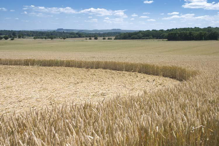 Crop Circle in Wiltshire, United Kingdom