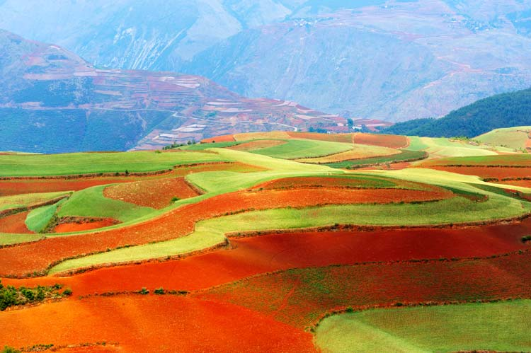 Autumn Fields in Yunnan Province, southwest of China