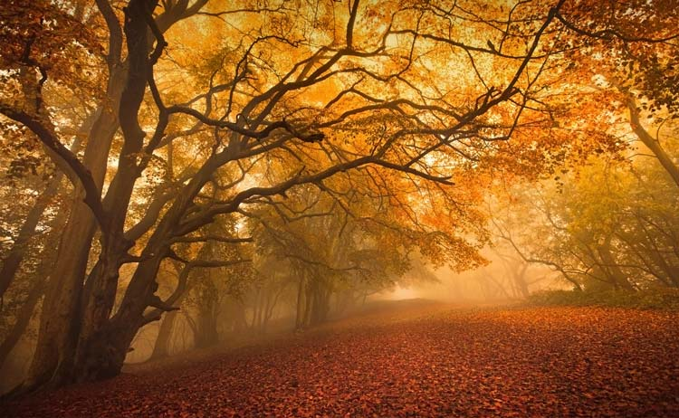 Colors of Fall in the Forest