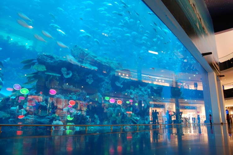 Glass-window aquarium in Dubai shopping center