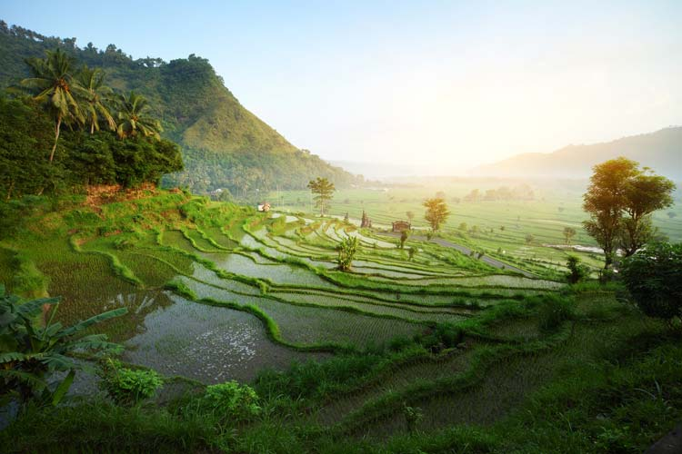 Rice Terraces on Bali, Indonesia