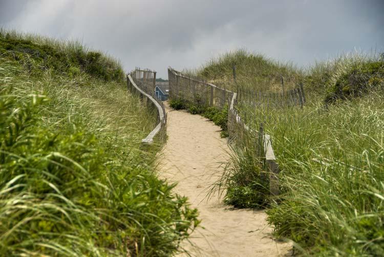 Nature on Nantucket Island