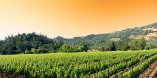 Weekend Getaway to a California Winery and Luxury Hotel