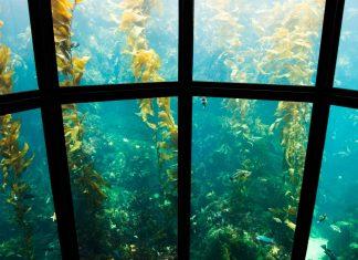 Best Aquariums in the U.S.