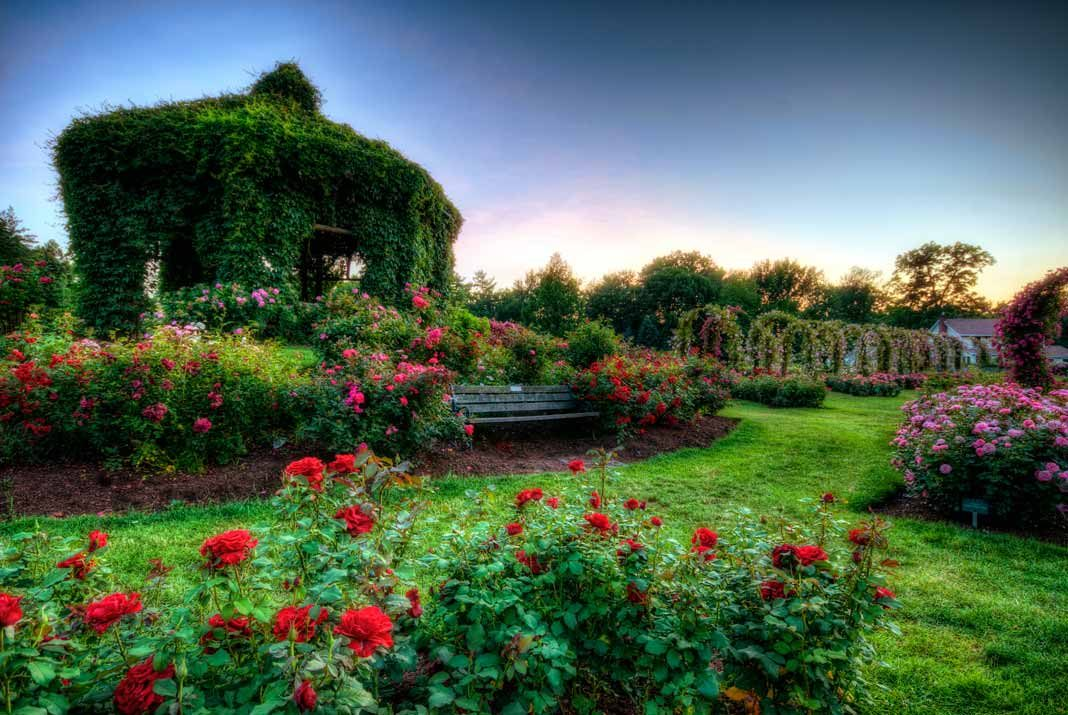 best rose gardens in the us - Pictures Of Rose Gardens