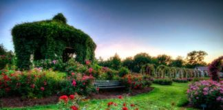 Best Rose Gardens in the US