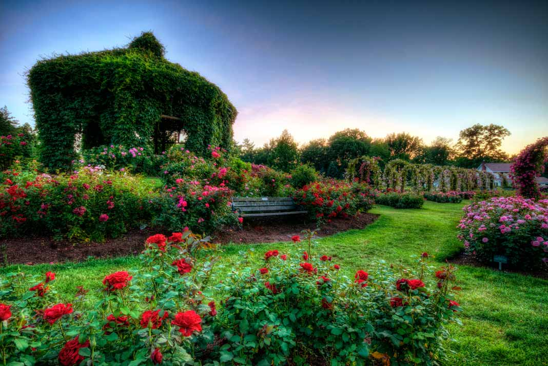 Roses In Garden: Stop And Smell The Roses- The Best Rose Gardens In The U.S