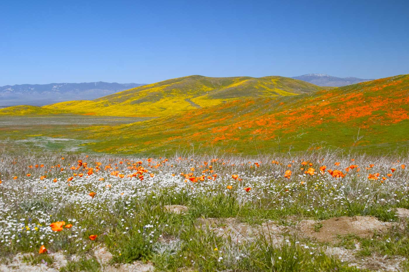 Spring is here the best places to visit in april for Prettiest places to visit in the us