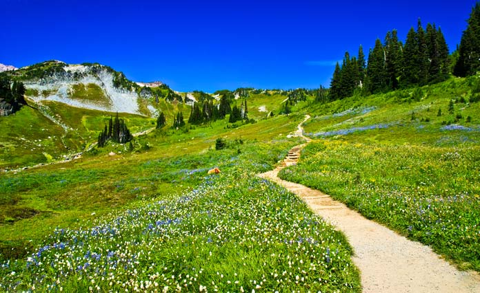 Golden Gate trail on mount Rainier