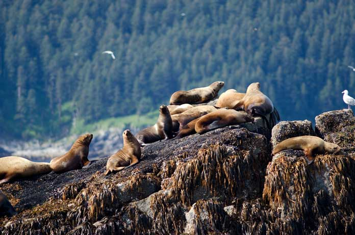 Marine and Land Wildlife