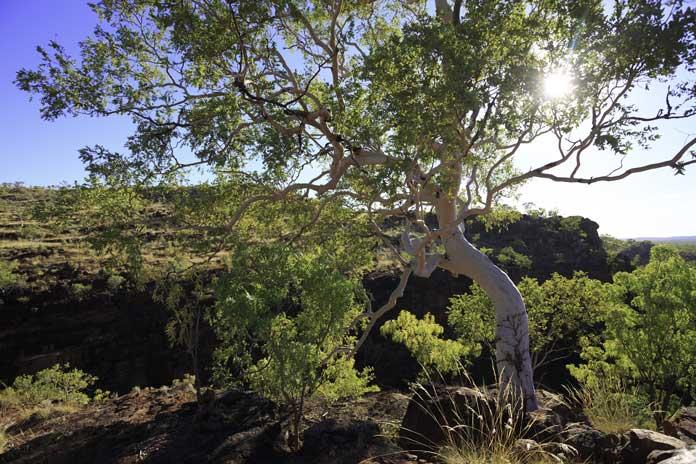Boodjamulla National Park in Queensland
