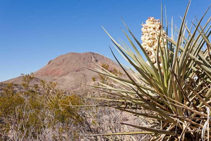 Chihuahuan Desert Nature