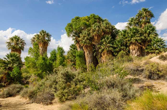 Cottonwood Spring Oasis