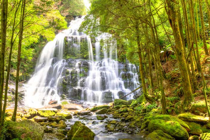 Nelson Falls Wild Rivers National Park Tasmania