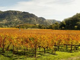 Best Napa Valley Wine Tours