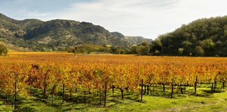 Best Napa Valley Wine Tours