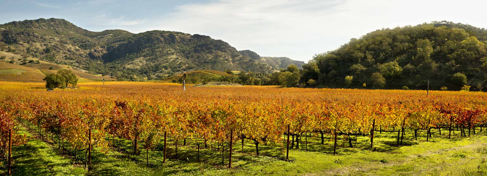 Best Napa Wine Tours