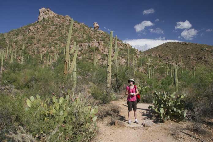 Hike Among the Saguaros