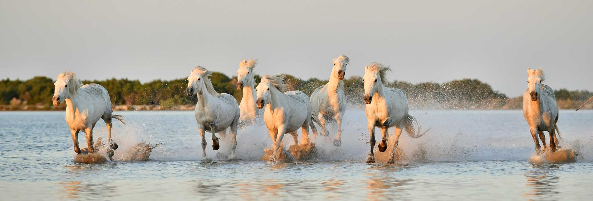 See The Last Of The Wild Horses As They Run Free In North America