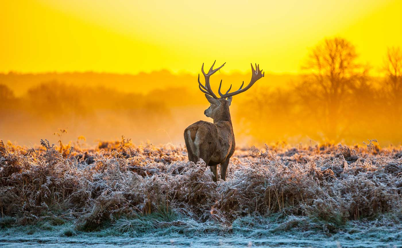 Hoge Veluwe National Park A Reserve Offering Endless Fun