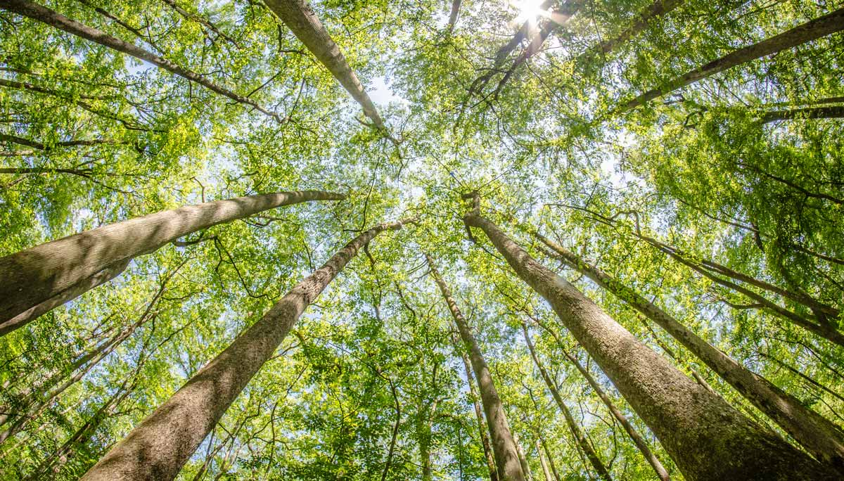 Congaree National Park Has Ancient Woodlands You Need To