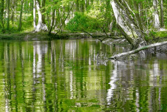 Congaree River