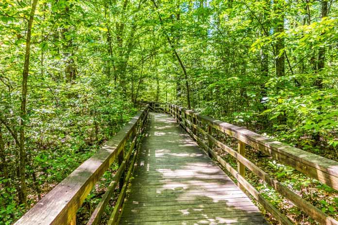Hikes Congaree National Park
