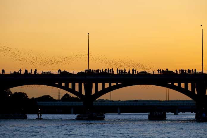 Bats Taking off From Under Congress Bridge, Austin TX