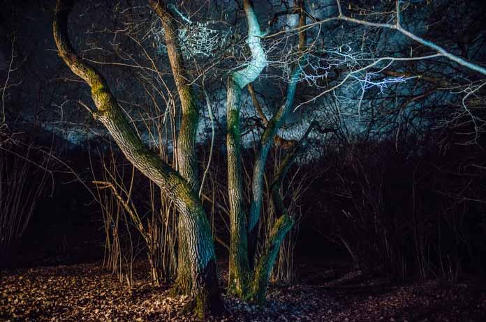Hoia Baciu Forest Romania