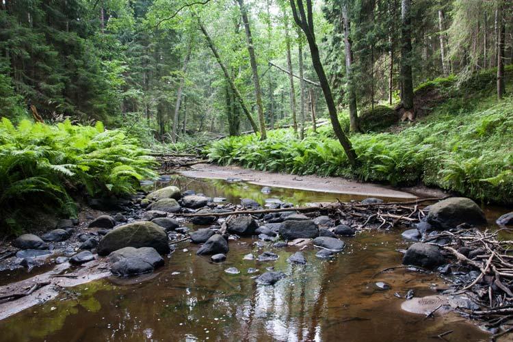 lahemaa-national-park