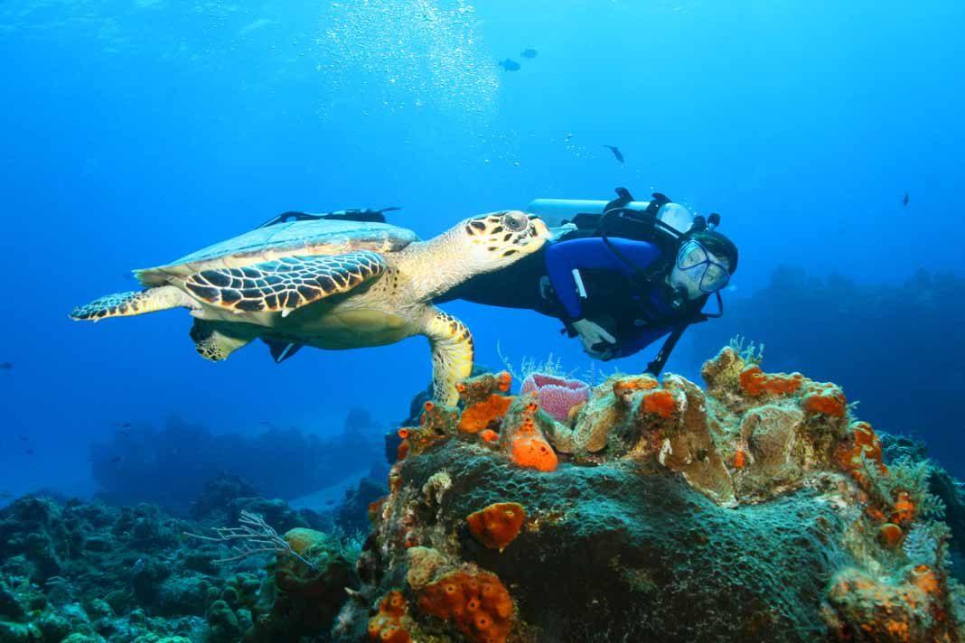 Bildergebnis für mexico diving