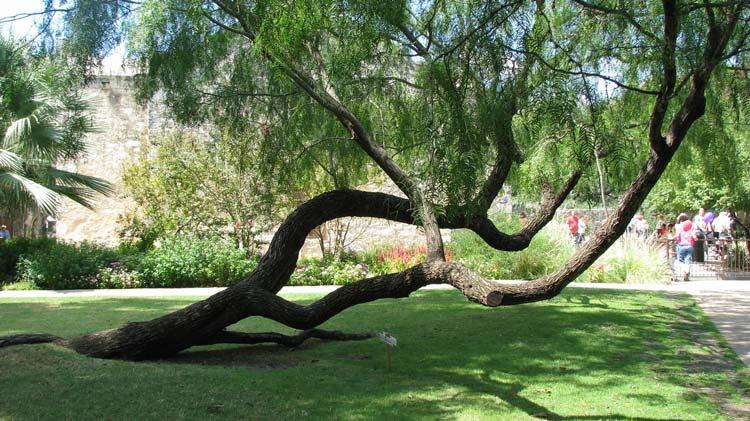 The-Alamo-Gardens