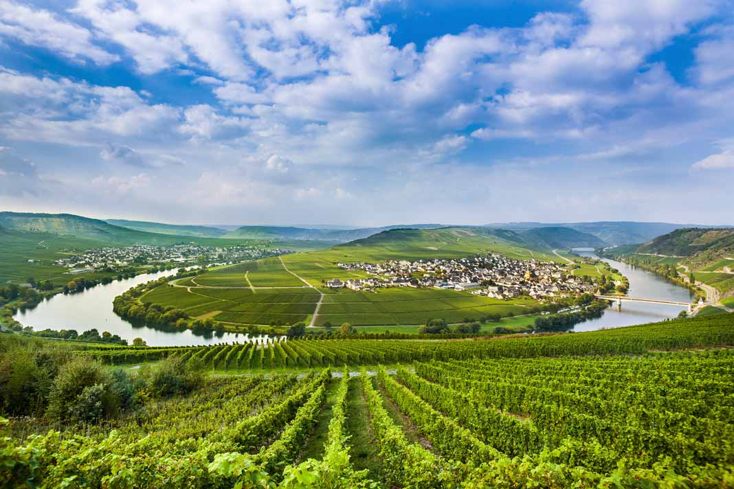 Mosel Vineyard Germany